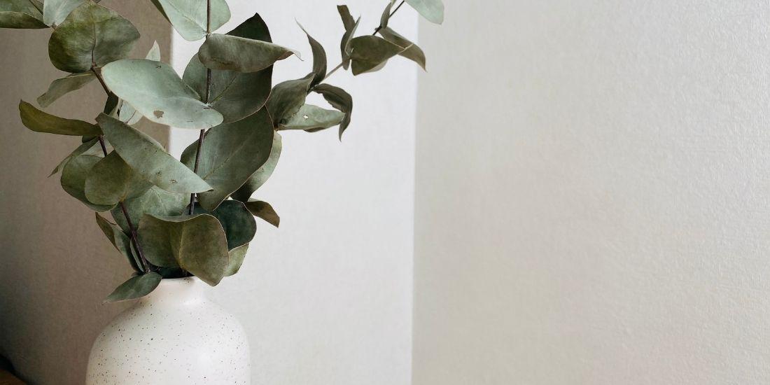 Déco Japandi : des plantes naturelles