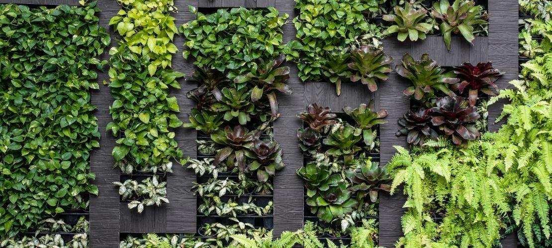 Comment faire pousser un mur végétal chez soi ?